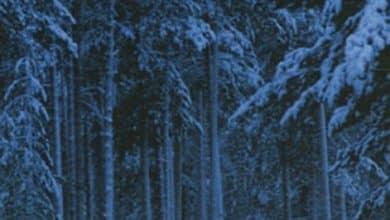 Gunnar Staalesen - La nuit tous les loups sont gris
