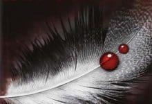 Chasseuse de vampires - Tome 1 à 7